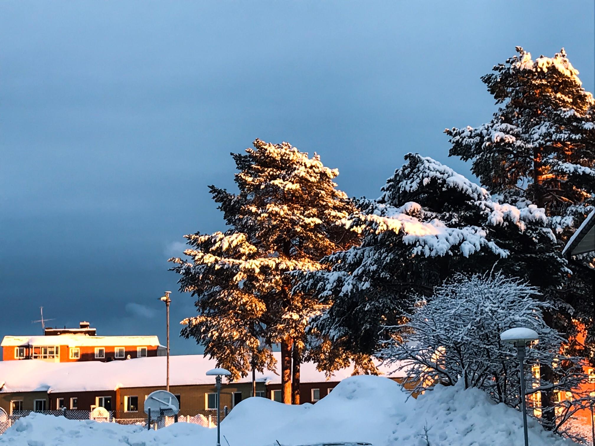 Vinterbild från skolan
